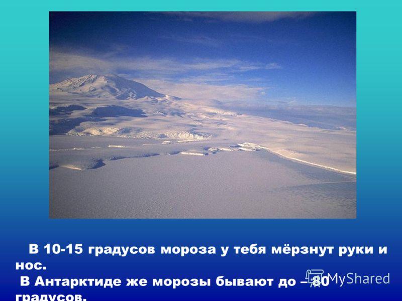 В 10-15 градусов мороза у тебя мёрзнут руки и нос. В Антарктиде же морозы бывают до – 80 градусов.