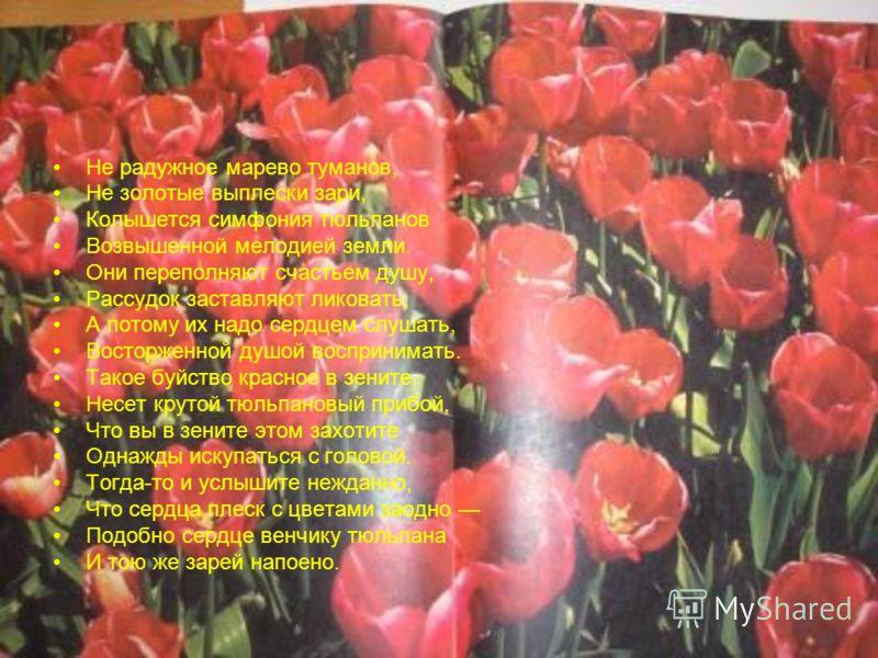 Не радужное марево туманов, Не золотые выплески зари, Колышется симфония тюльпанов Возвышенной мелодией земли. Они переполняют счастьем душу, Рассудок заставляют ликовать, А потому их надо сердцем слушать, Восторженной душой воспринимать. Такое буйст