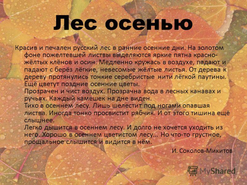 Лес осенью Красив и печален русский лес в ранние осенние дни. На золотом фоне пожелтевшей листвы выделяются яркие пятна красно- жёлтых клёнов и осин. Медленно кружась в воздухе, падают и падают с берёз лёгкие, невесомые жёлтые листья. От дерева к дер