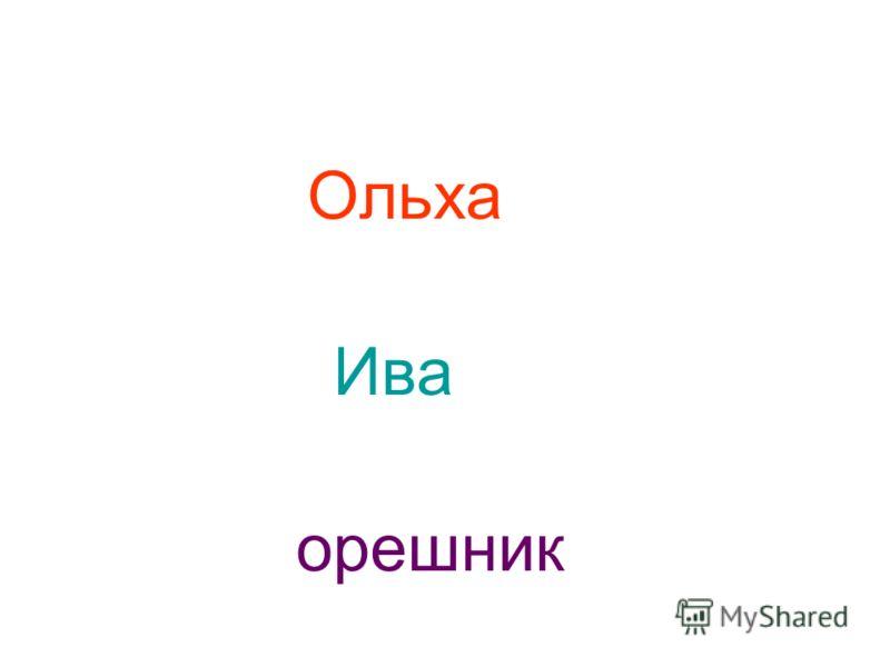 Ольха Ива орешник