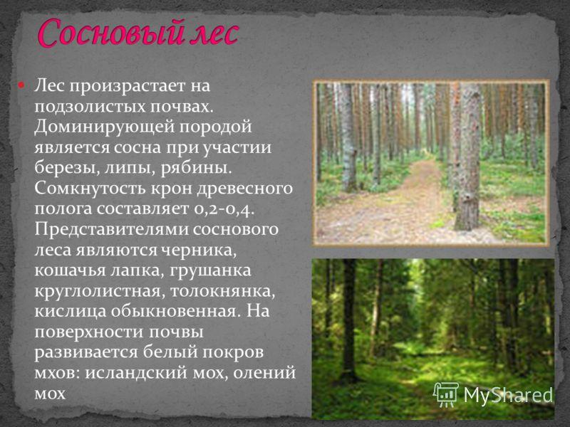 Лес произрастает на подзолистых почвах. Доминирующей породой является сосна при участии березы, липы, рябины. Сомкнутость крон древесного полога составляет 0,2-0,4. Представителями соснового леса являются черника, кошачья лапка, грушанка круглолистна