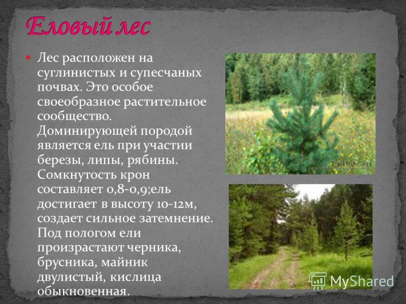 Лес расположен на суглинистых и супесчаных почвах. Это особое своеобразное растительное сообщество. Доминирующей породой является ель при участии березы, липы, рябины. Сомкнутость крон составляет 0,8-0,9;ель достигает в высоту 10-12м, создает сильное