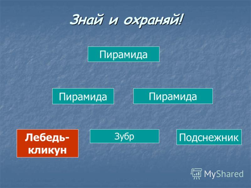 Пирамида Лебедь- кликун Зубр Подснежник Знай и охраняй!
