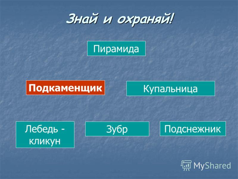 Пирамида Подкаменщик Купальница Лебедь - кликун Зубр Подснежник Знай и охраняй!