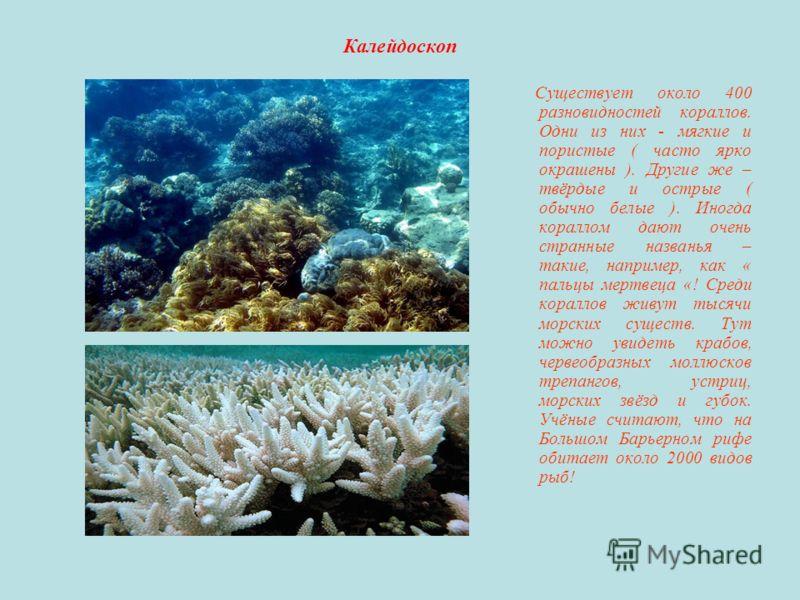 Калейдоскоп Существует около 400 разновидностей кораллов. Одни из них - мягкие и пористые ( часто ярко окрашены ). Другие же – твёрдые и острые ( обычно белые ). Иногда кораллом дают очень странные названья – такие, например, как « пальцы мертвеца «!