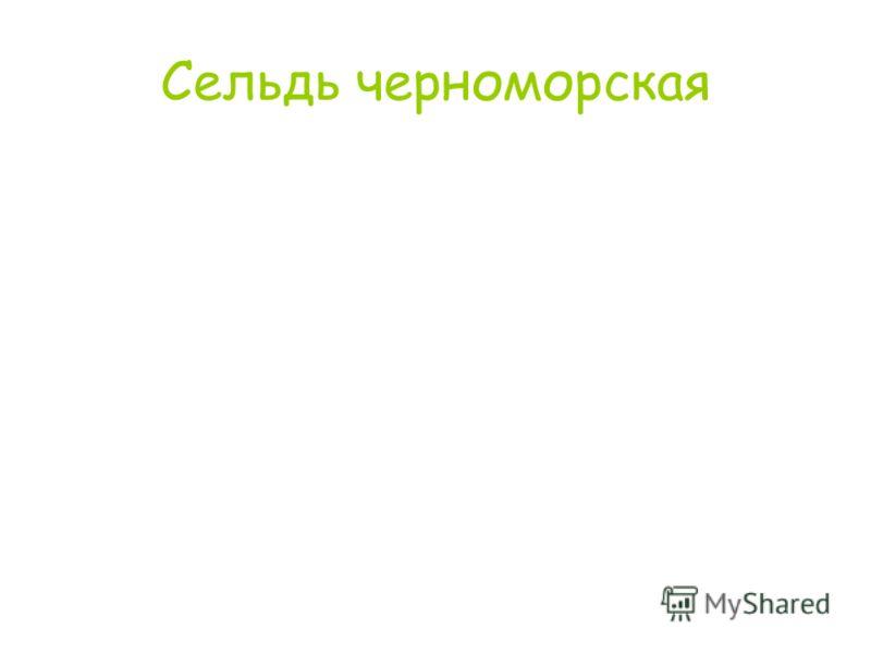 Сельдь черноморская