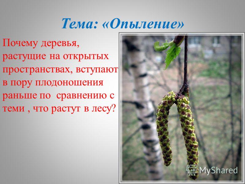 Тема: «Опыление» Почему деревья, растущие на открытых пространствах, вступают в пору плодоношения раньше по сравнению с теми, что растут в лесу?