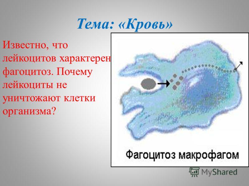 Тема: «Кровь» Известно, что лейкоцитов характерен фагоцитоз. Почему лейкоциты не уничтожают клетки организма?