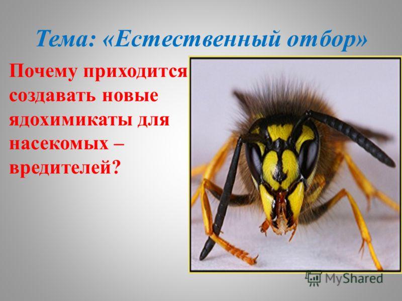 Тема: «Естественный отбор» Почему приходится создавать новые ядохимикаты для насекомых – вредителей?