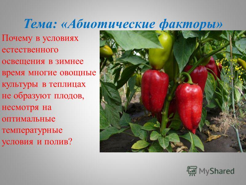 Тема: «Абиотические факторы» Почему в условиях естественного освещения в зимнее время многие овощные культуры в теплицах не образуют плодов, несмотря на оптимальные температурные условия и полив?