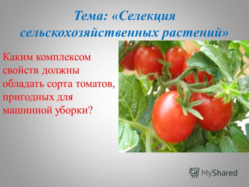 Тема: «Селекция сельскохозяйственных растений» Каким комплексом свойств должны обладать сорта томатов, пригодных для машинной уборки?