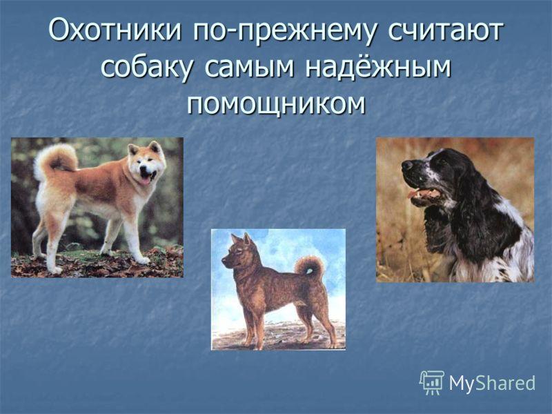 Охотники по-прежнему считают собаку самым надёжным помощником
