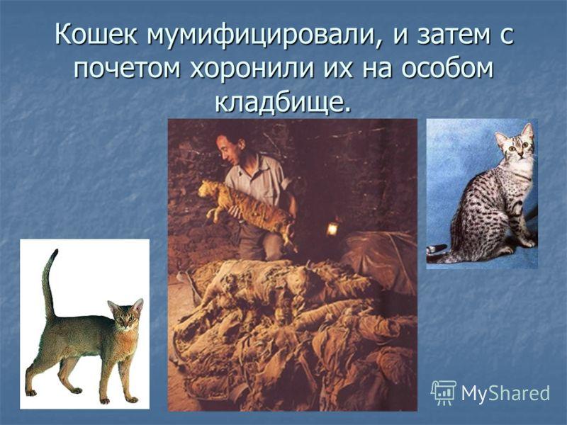 Кошек мумифицировали, и затем с почетом хоронили их на особом кладбище.