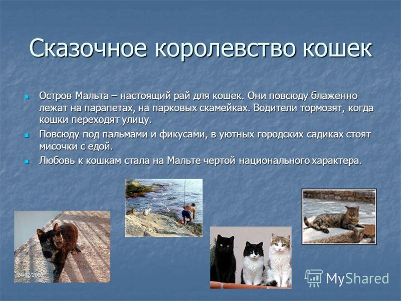 Сказочное королевство кошек Остров Мальта – настоящий рай для кошек. Они повсюду блаженно лежат на парапетах, на парковых скамейках. Водители тормозят, когда кошки переходят улицу. Повсюду под пальмами и фикусами, в уютных городских садиках стоят мис