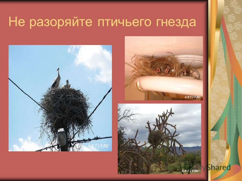 Не разоряйте птичьего гнезда