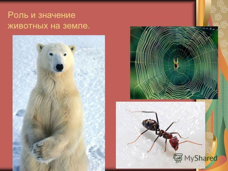 Роль и значение животных на земле.