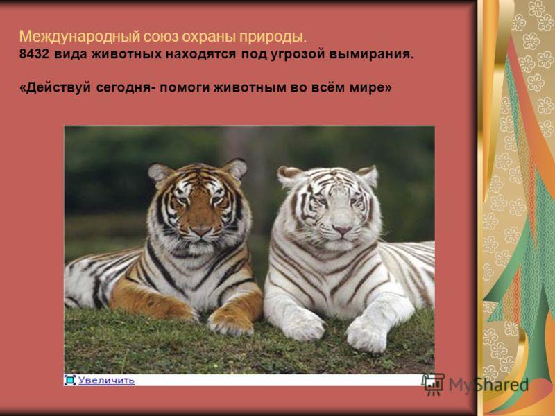 Международный союз охраны природы. 8432 вида животных находятся под угрозой вымирания. «Действуй сегодня- помоги животным во всём мире»