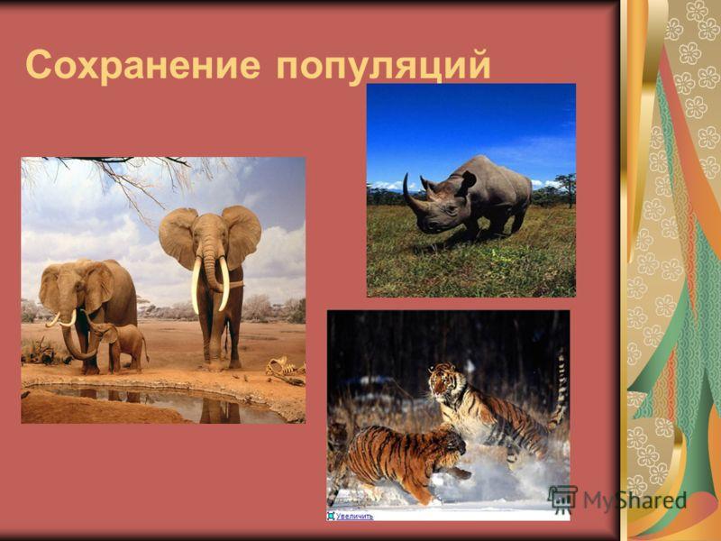 Сохранение популяций