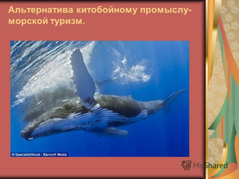 Альтернатива китобойному промыслу- морской туризм.