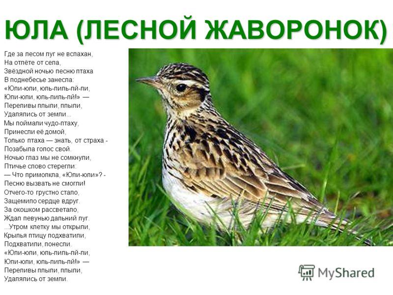 ЮЛА (ЛЕСНОЙ ЖАВОРОНОК) Где за лесом луг не вспахан, На отлёте от села, Звёздной ночью песню птаха В поднебесье занесла: «Юли-юли, юль-лиль-лй-ли, Юли-юли, юль-лиль-лй!» Переливы плыли, плыли, Удалялись от земли... Мы поймали чудо-птаху, Принесли её д