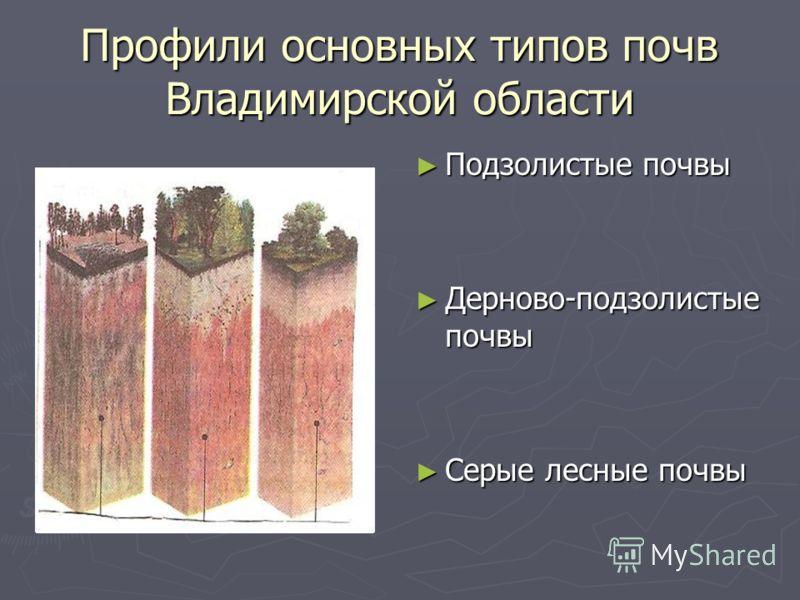 Профили основных типов почв Владимирской области Подзолистые почвы Дерново-подзолистые почвы Серые лесные почвы