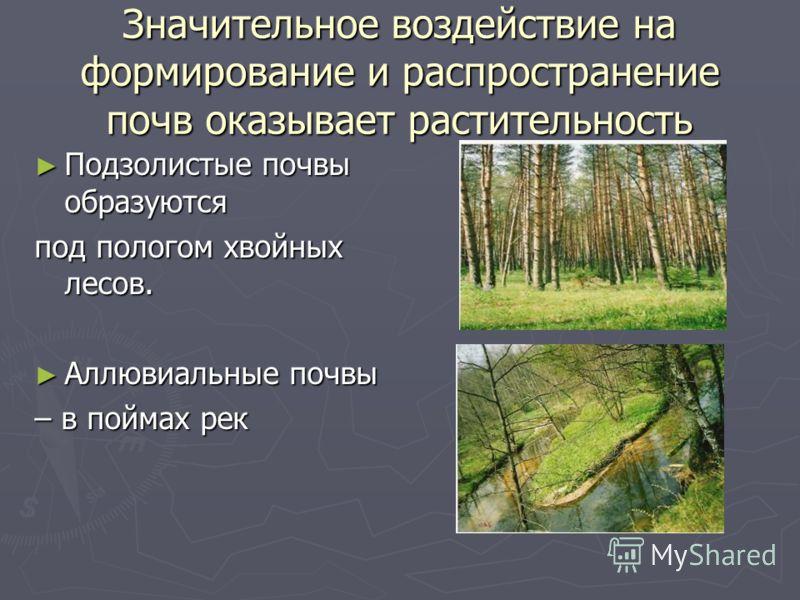 Значительное воздействие на формирование и распространение почв оказывает растительность Подзолистые почвы образуются под пологом хвойных лесов. Аллювиальные почвы – в поймах рек