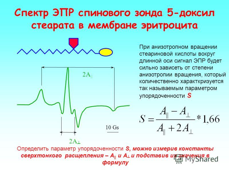 Представленные спектры ЭПР отражают поведение зонда ТЕМПО в средах с различной гидрофобностью. Определив отношения a / (a + b) или (a / c) в этом спектре, можно посчитать параметр гидрофобности f, показывающий сколько и в какой фракции мембраны содер