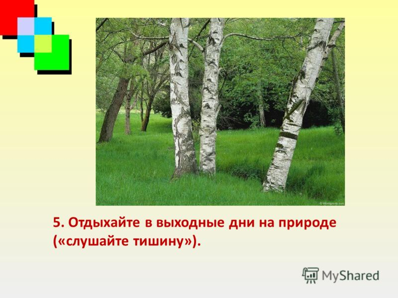 5. Отдыхайте в выходные дни на природе («слушайте тишину»).