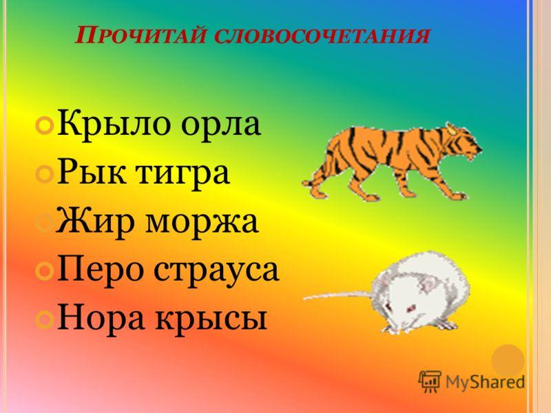 П РОЧИТАЙ СЛОВОСОЧЕТАНИЯ Крыло орла Рык тигра Жир моржа Перо страуса Нора крысы