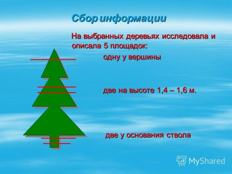 На выбранных деревьях исследовала и описала 5 площадок: На выбранных деревьях исследовала и описала 5 площадок: одну у вершины одну у вершины две на высоте 1,4 – 1,6 м. две на высоте 1,4 – 1,6 м. две у основания ствола две у основания ствола Сбор инф