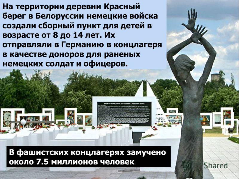 На территории деревни Красный берег в Белоруссии немецкие войска создали сборный пункт для детей в возрасте от 8 до 14 лет. Их отправляли в Германию в концлагеря в качестве доноров для раненых немецких солдат и офицеров. В фашистских концлагерях заму