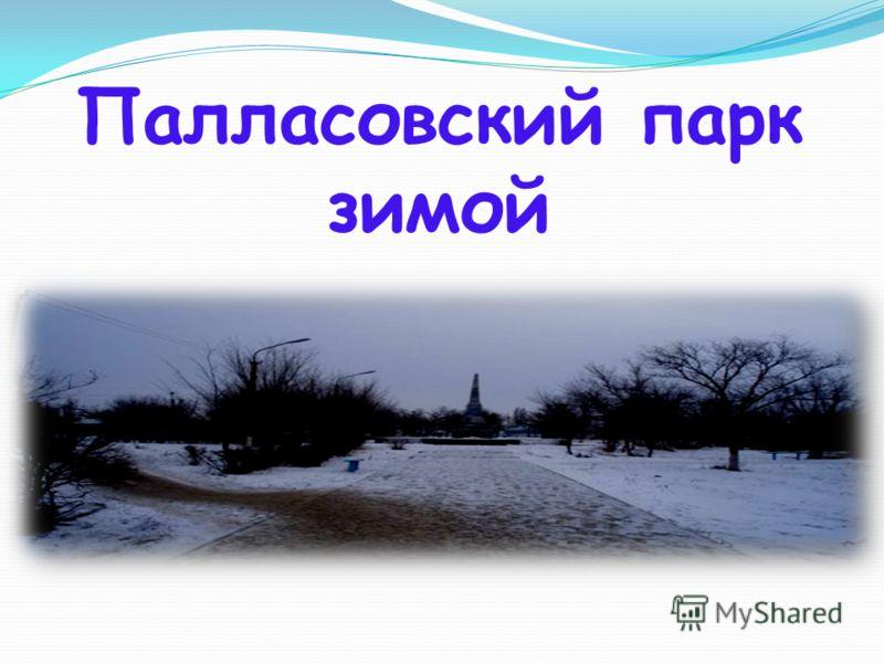 Палласовский парк зимой