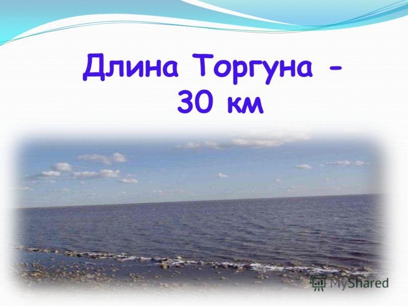 Длина Торгуна - 30 км