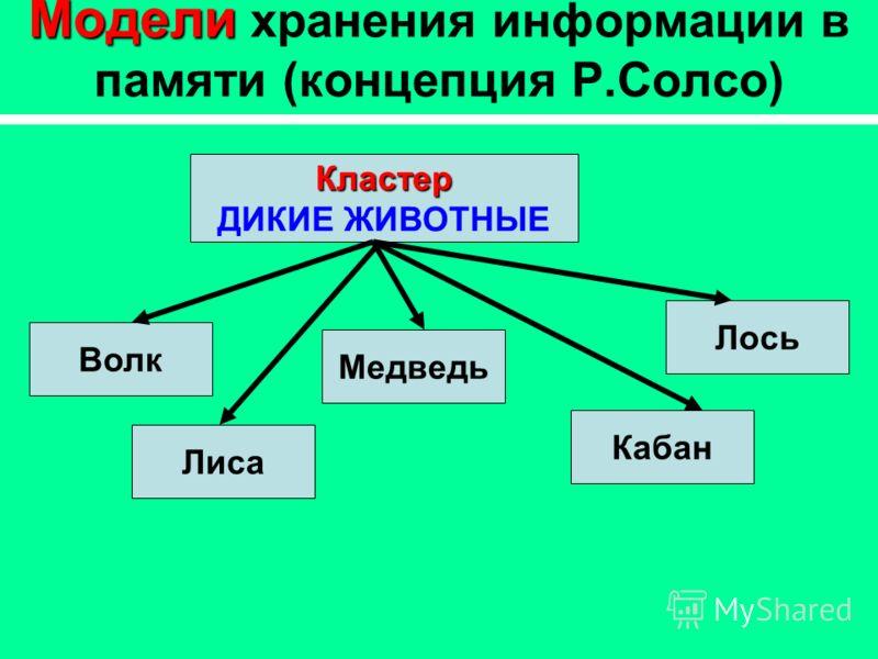 Модели Модели хранения информации в памяти (концепция Р.Солсо) Кластер ДИКИЕ ЖИВОТНЫЕ Волк Медведь Лось Кабан Лиса