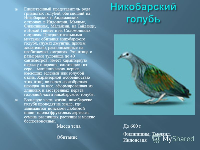 Единственный представитель рода гривистых голубей, обитающий на Никобарских и Андаманских островах, в Индонезии, Мьянме, Филиппинах, Малайзии, на Тайланде, в Новой Гвинее и на Соломоновых островах. Предпочтительными местами обитания никобарского голу