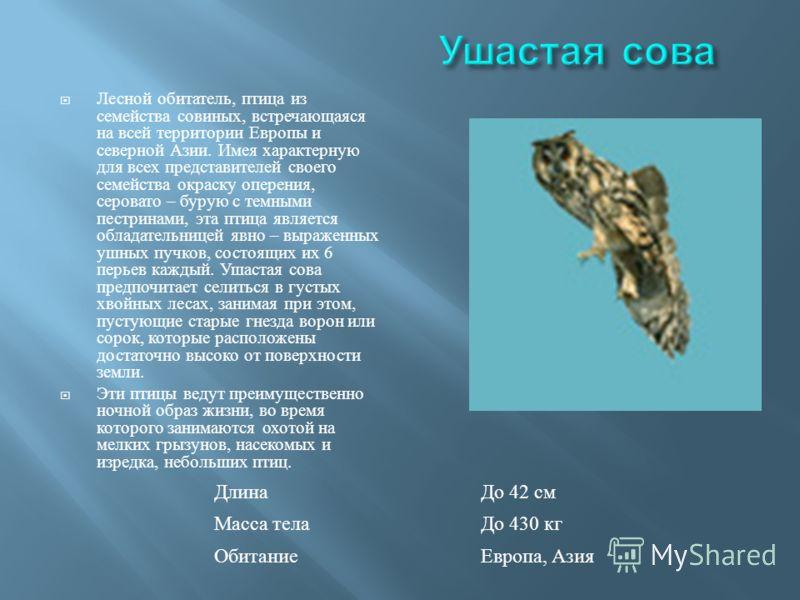 Лесной обитатель, птица из семейства совиных, встречающаяся на всей территории Европы и северной Азии. Имея характерную для всех представителей своего семейства окраску оперения, серовато – бурую с темными пестринами, эта птица является обладательниц