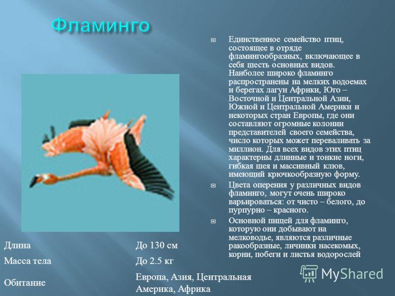 Единственное семейство птиц, состоящее в отряде фламингообразных, включающее в себя шесть основных видов. Наиболее широко фламинго распространены на мелких водоемах и берегах лагун Африки, Юго – Восточной и Центральной Азии, Южной и Центральной Амери