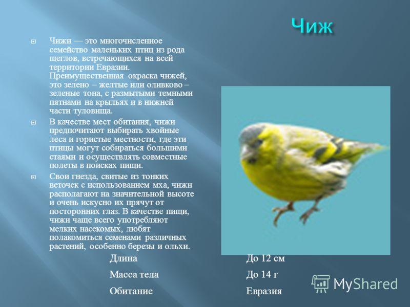 Чижи это многочисленное семейство маленьких птиц из рода щеглов, встречающихся на всей территории Евразии. Преимущественная окраска чижей, это зелено – желтые или оливково – зеленые тона, с размытыми темными пятнами на крыльях и в нижней части тулови