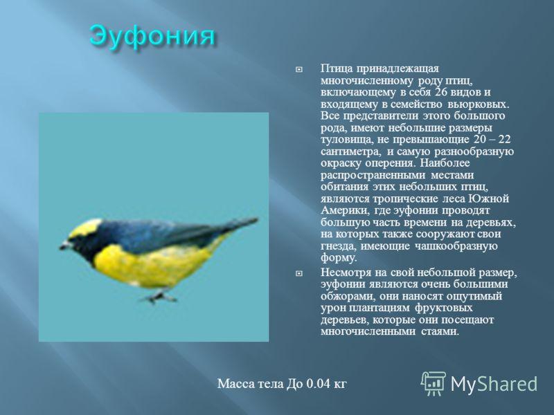 Птица принадлежащая многочисленному роду птиц, включающему в себя 26 видов и входящему в семейство вьюрковых. Все представители этого большого рода, имеют небольшие размеры туловища, не превышающие 20 – 22 сантиметра, и самую разнообразную окраску оп