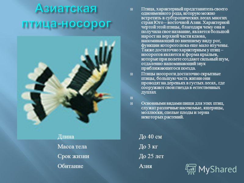 Птица, характерный представитель своего одноименного рода, которую можно встретить в субтропических лесах многих стран Юго – восточной Азии. Характерной чертой этой птицы, благодаря чему она и получила свое название, является большой нарост на верхне