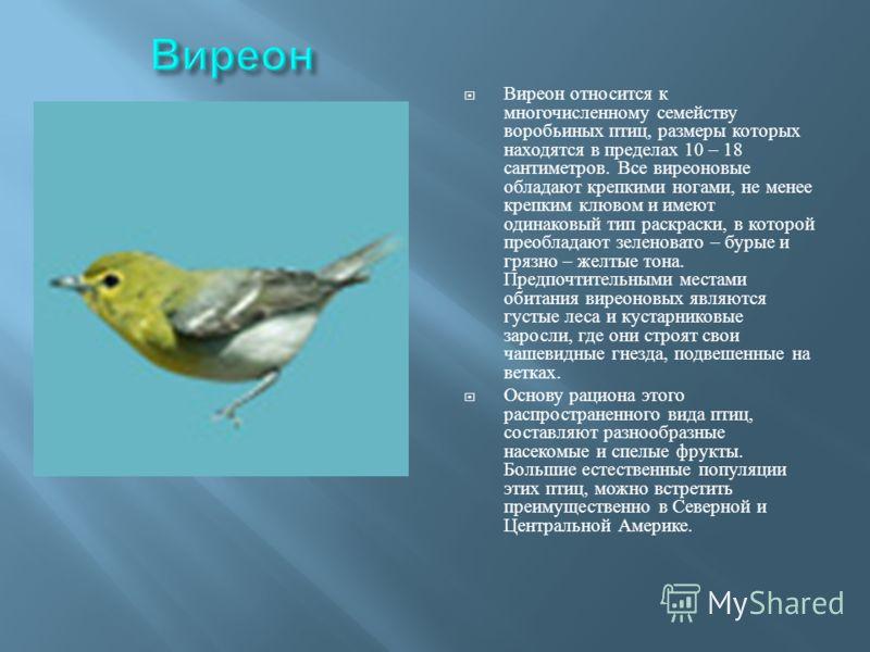 Виреон относится к многочисленному семейству воробьиных птиц, размеры которых находятся в пределах 10 – 18 сантиметров. Все виреоновые обладают крепкими ногами, не менее крепким клювом и имеют одинаковый тип раскраски, в которой преобладают зеленоват