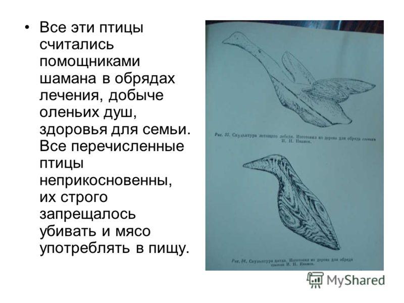 Культовым почитанием у эвенков-орочонов пользовались такие птицы: ворон (оли), орёл (киран), лебедь (гах), гагара (укан), утка-чирок (чиркони), чёрный дятел (кирокта), кукушка (ку-ку), кулик (чукчумо), бекас (олиптыкин), синичка (чипиче- чиче).