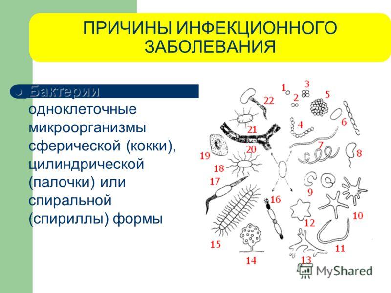 ПРИЧИНЫ ИНФЕКЦИОННОГО ЗАБОЛЕВАНИЯ Бактерии Бактерии - одноклеточные микроорганизмы сферической (кокки), цилиндрической (палочки) или спиральной (спириллы) формы