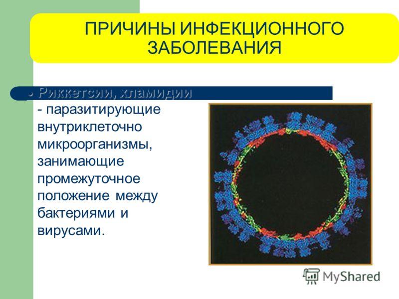 ПРИЧИНЫ ИНФЕКЦИОННОГО ЗАБОЛЕВАНИЯ Риккетсии, хламидии Риккетсии, хламидии - паразитирующие внутриклеточно микроорганизмы, занимающие промежуточное положение между бактериями и вирусами.