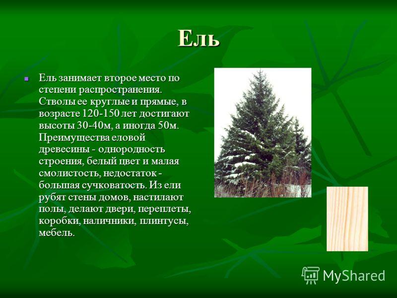 Ель Ель занимает второе место по степени распространения. Стволы ее круглые и прямые, в возрасте 120-150 лет достигают высоты 30-40м, а иногда 50м. Преимущества еловой древесины - однородность строения, белый цвет и малая смолистость, недостаток - бо