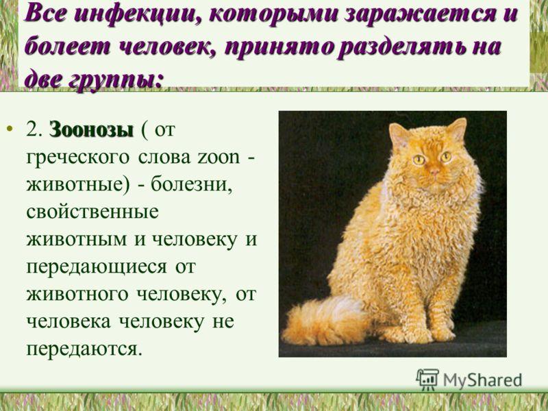 Все инфекции, которыми заражается и болеет человек, принято разделять на две группы: Зоонозы2. Зоонозы ( от греческого слова zoon - животные) - болезни, свойственные животным и человеку и передающиеся от животного человеку, от человека человеку не пе