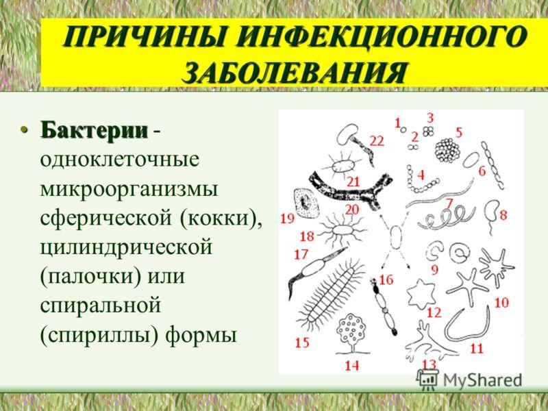 ПРИЧИНЫ ИНФЕКЦИОННОГО ЗАБОЛЕВАНИЯ БактерииБактерии - одноклеточные микроорганизмы сферической (кокки), цилиндрической (палочки) или спиральной (спирил