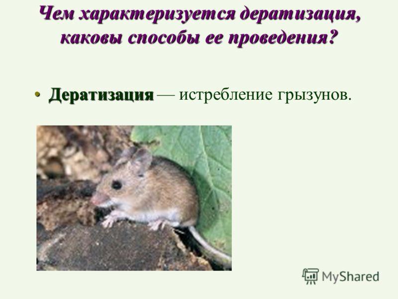 Чем характеризуется дератизация, каковы способы ее проведения? ДератизацияДератизация истребление грызунов.