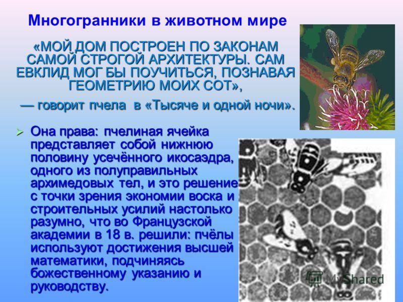 «МОЙ ДОМ ПОСТРОЕН ПО ЗАКОНАМ САМОЙ СТРОГОЙ АРХИТЕКТУРЫ. САМ ЕВКЛИД МОГ БЫ ПОУЧИТЬСЯ, ПОЗНАВАЯ ГЕОМЕТРИЮ МОИХ СОТ», говорит пчела в «Тысяче и одной ночи». Она права: пчелиная ячейка представляет собой нижнюю половину усечённого икосаэдра, одного из по