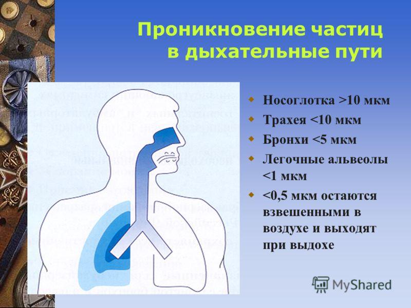 Проникновение частиц в дыхательные пути Носоглотка >10 мкм Трахея
